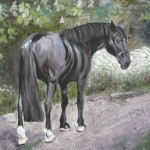 Black Stallion commission